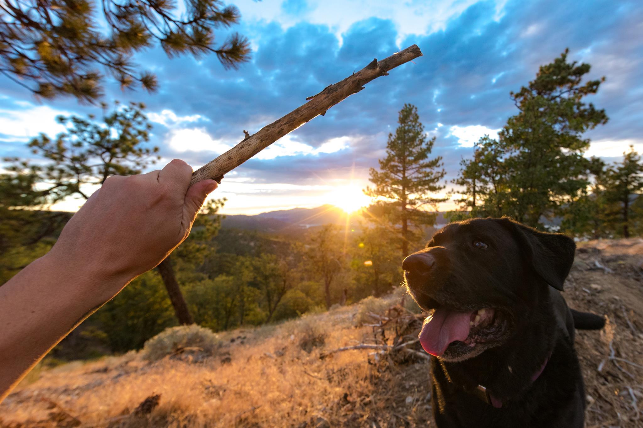 Big Bear Vacations Pet Friendly Vacation Rentals Big Bear Lake Mountain California