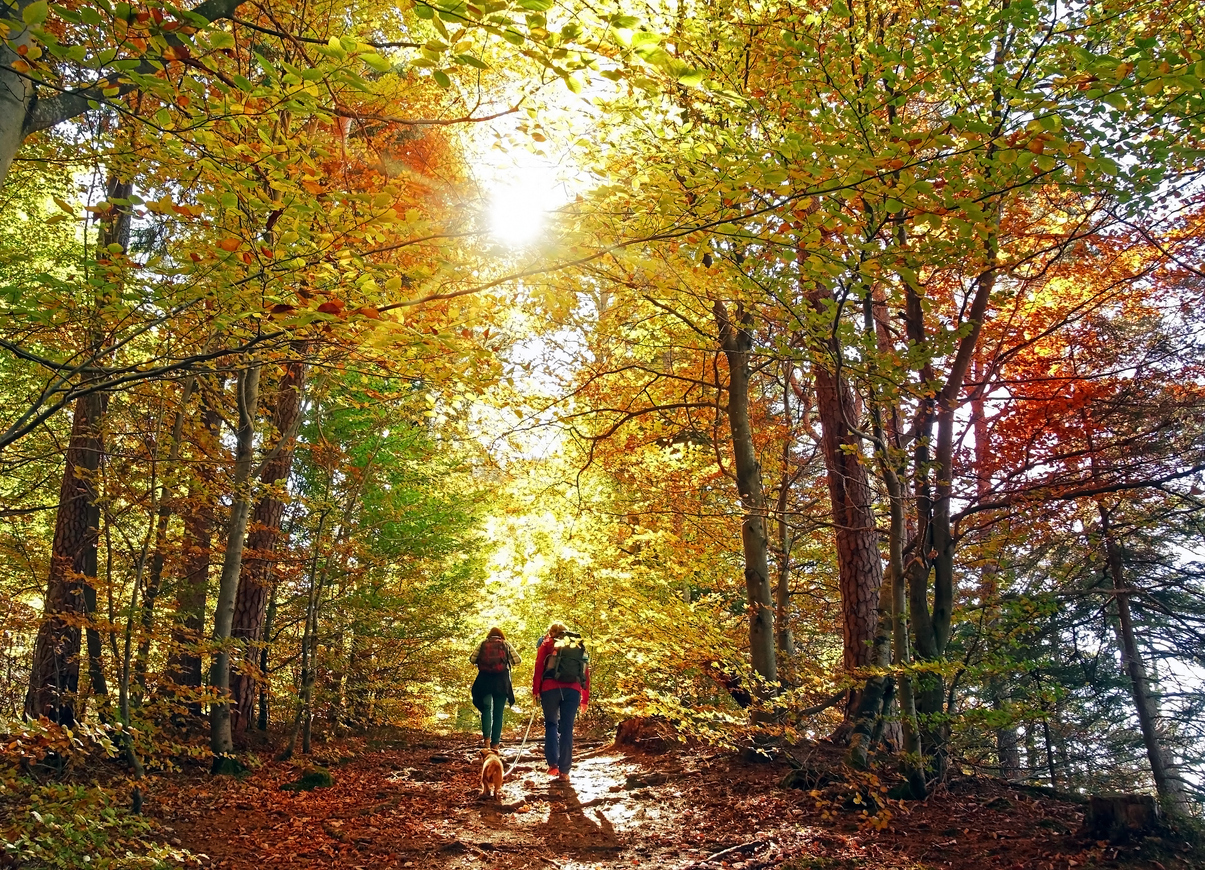 Hiking Guide for Beginners in Autumn Hike with Friends and Pets