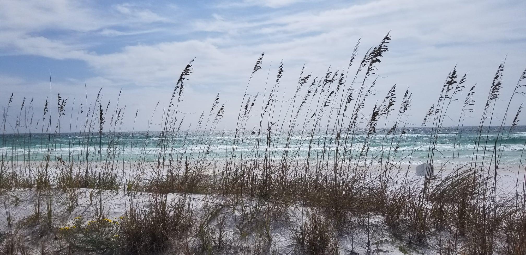 Newman Dailey Resort Properties Destin Florida Emerald Coast
