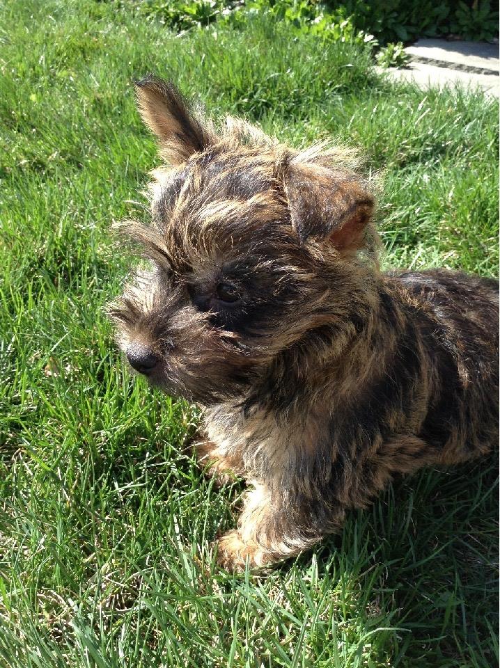 Pets Help You Build A Relationship Koda Puppy