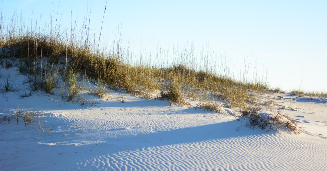 Reed-Real-Estate-Gulf-Shore-Beach-Dune-Alabama.