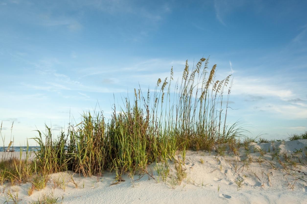 Things To Do in the Hilton Head Island Area of South Carolina