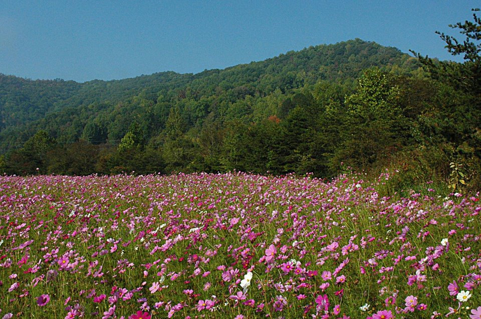 Wildflower Cabin Rentals Named for the Wildfowers around the Cowee Mountains North Carolina