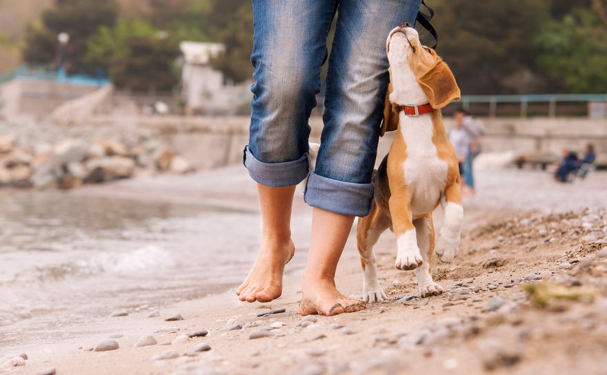 Holiday with a dog that has manners and listens well