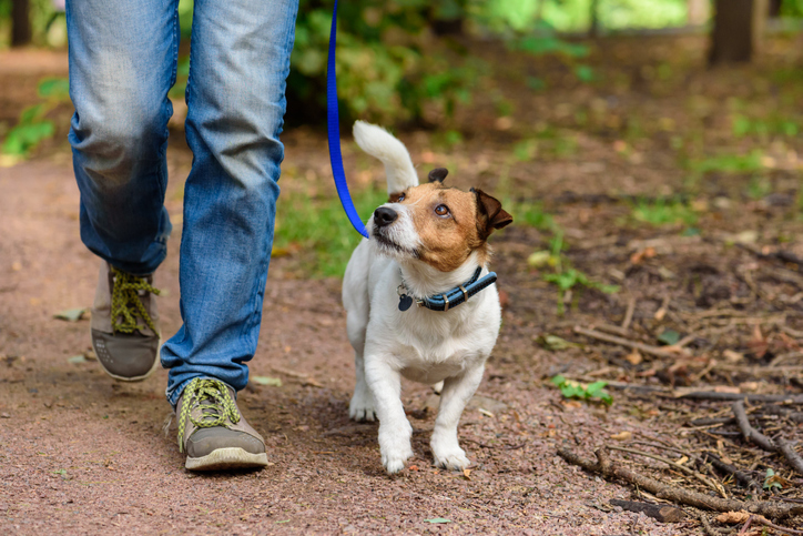 Pet Friendly Hike with your Dog