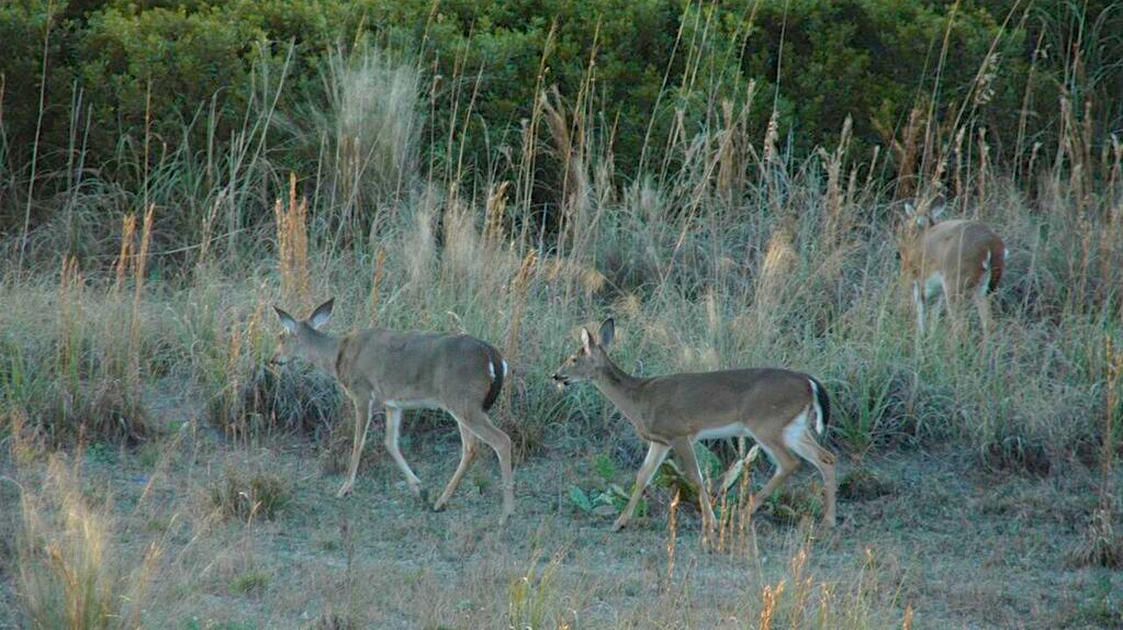 Watch the deer graze in the protected dunes from the deck.