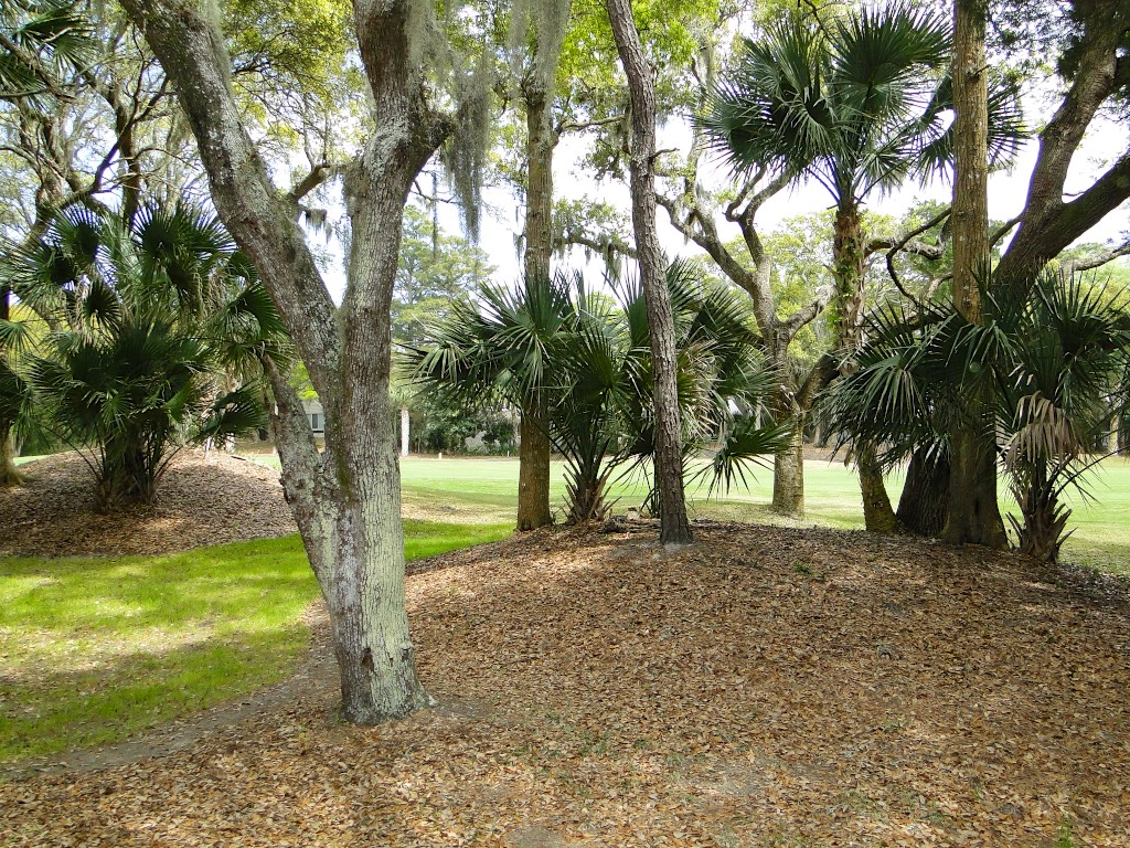 Nestled under the shade of the live oaks and palm trees.