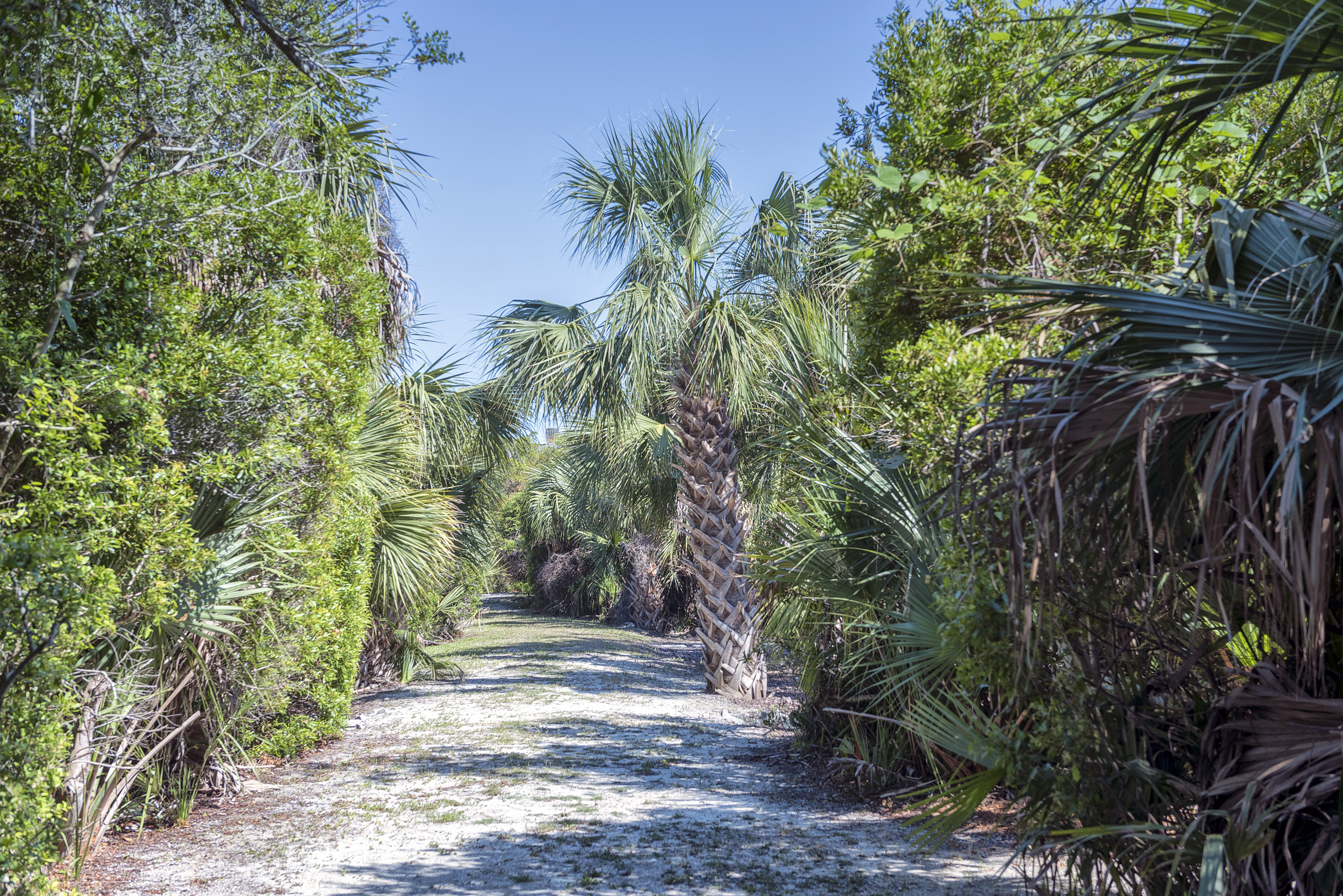 Follow the flagstone in the backyard to the natural, private path to the beach.