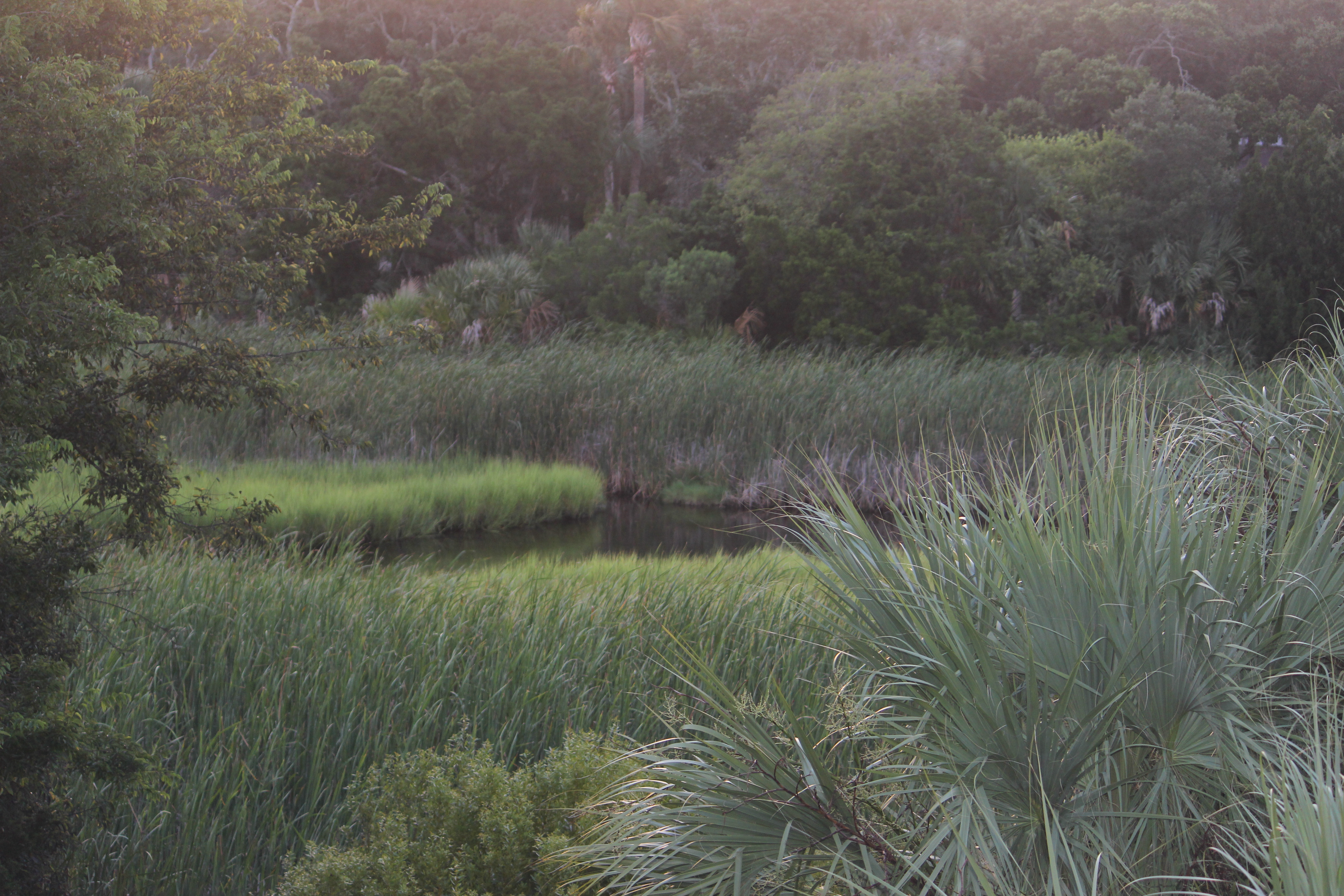 No matter the season, you will be treated to Seabrook's natural splendor.