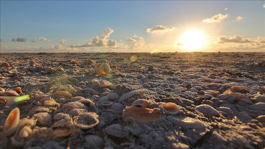 Shells on the Beach at Sunset
