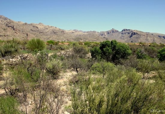 FR-Greens_14273-Tucson-Arizona-13