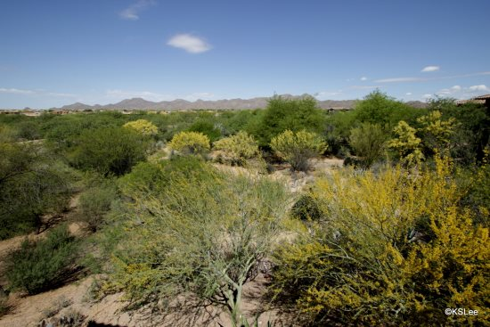 FR-Vistoso_Golf_Villa_220-Tucson-Arizona-14