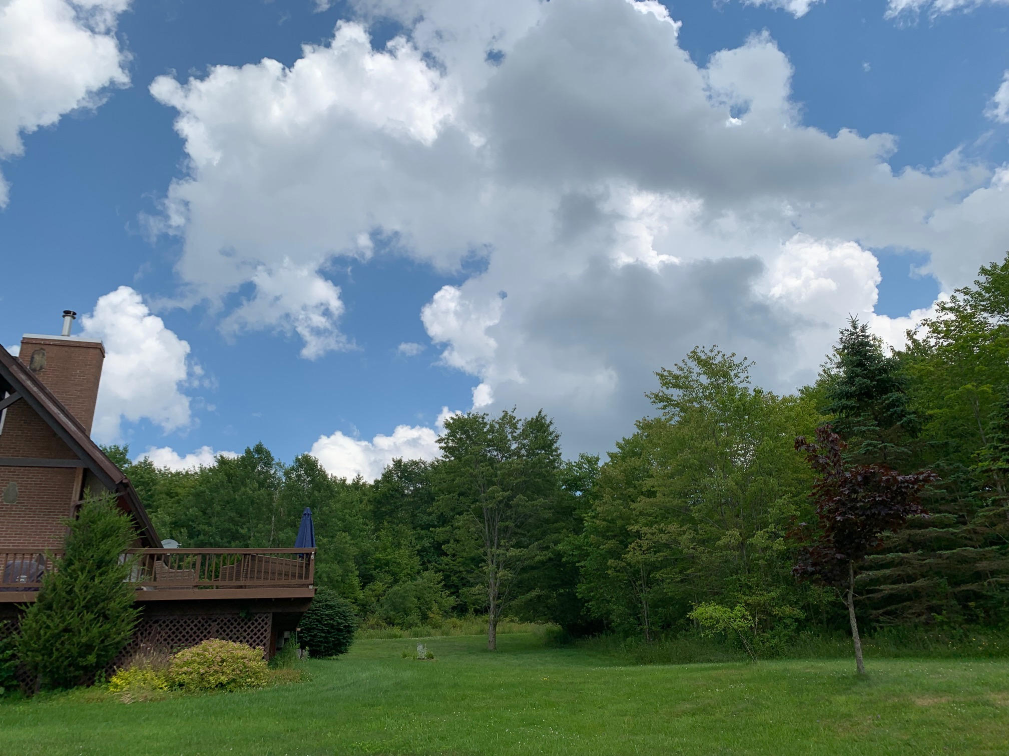 Wonderfully wooded 5 acre property