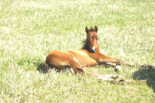 One of the baby colts enjoying the sun