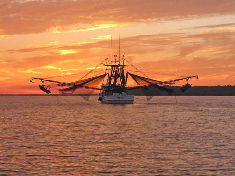 Local shrimpers bring in the days catch.