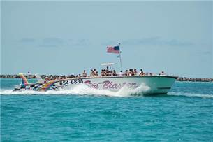 Adult Admission Free on a Dolphin Cruise