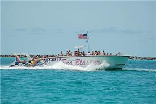 Free adult admission on a Dolphin Cruise in season
