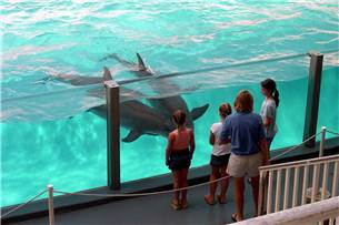 One Adult Admission to Gulf World Marine Park