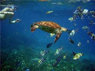 Free adult admission on a Snorkeling excursion in season