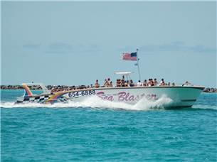 Enjoy one Adult Fare Free Onboard a Dolphin Cruise