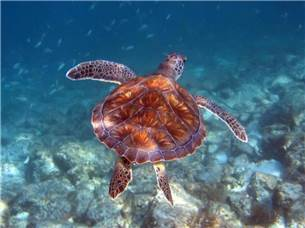 One Free Adult Snorkel Excursion in Season