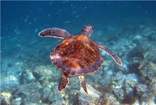 One Adult Free on a Snorkeling Tour