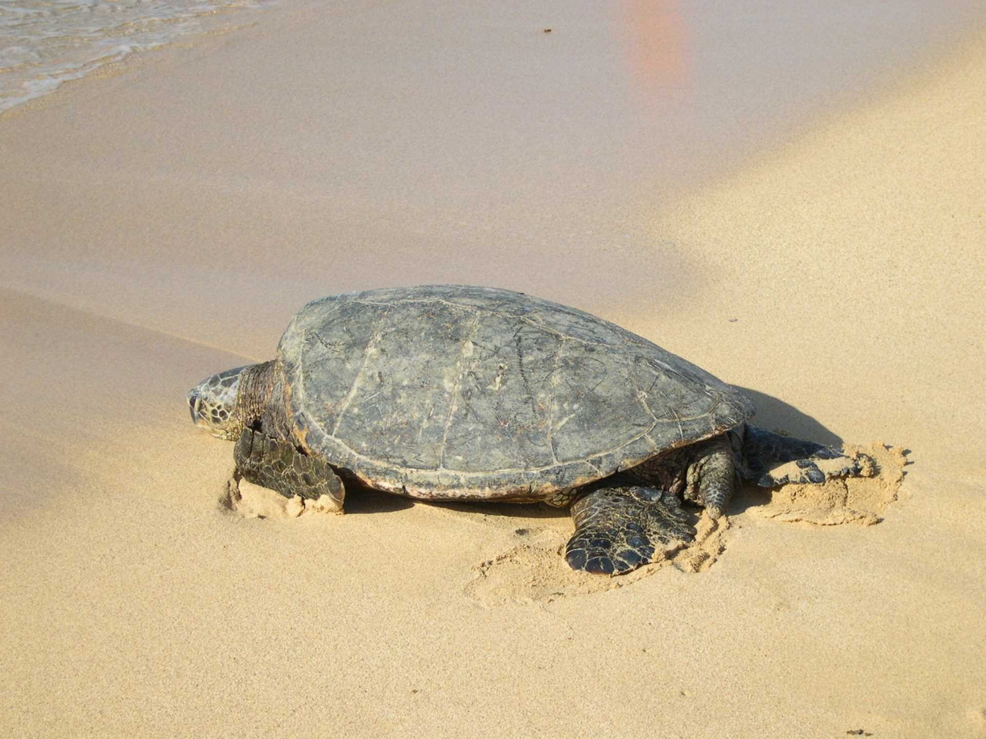Friendly visitor often seen on local beaches