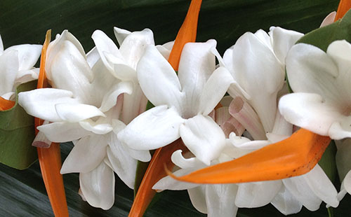 A fragrant lei