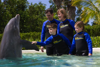 Swim with the dophins during your stay