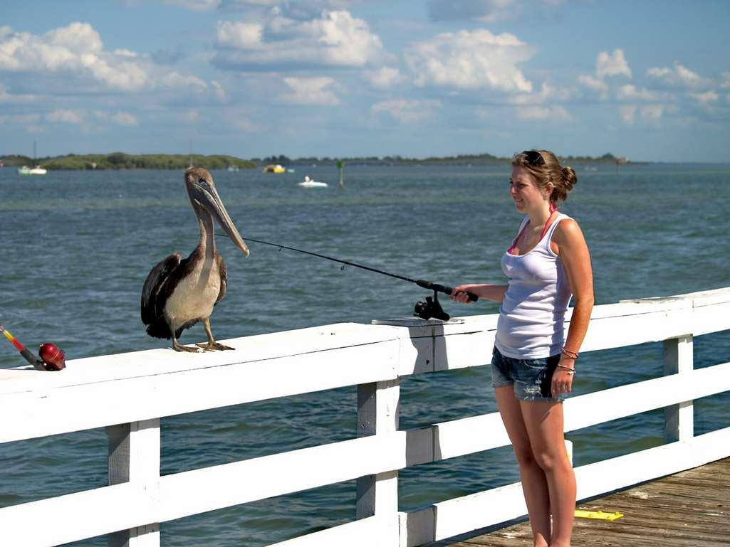 Enjoy the Natural Wildlife & Free  Fishing from the Pier.
