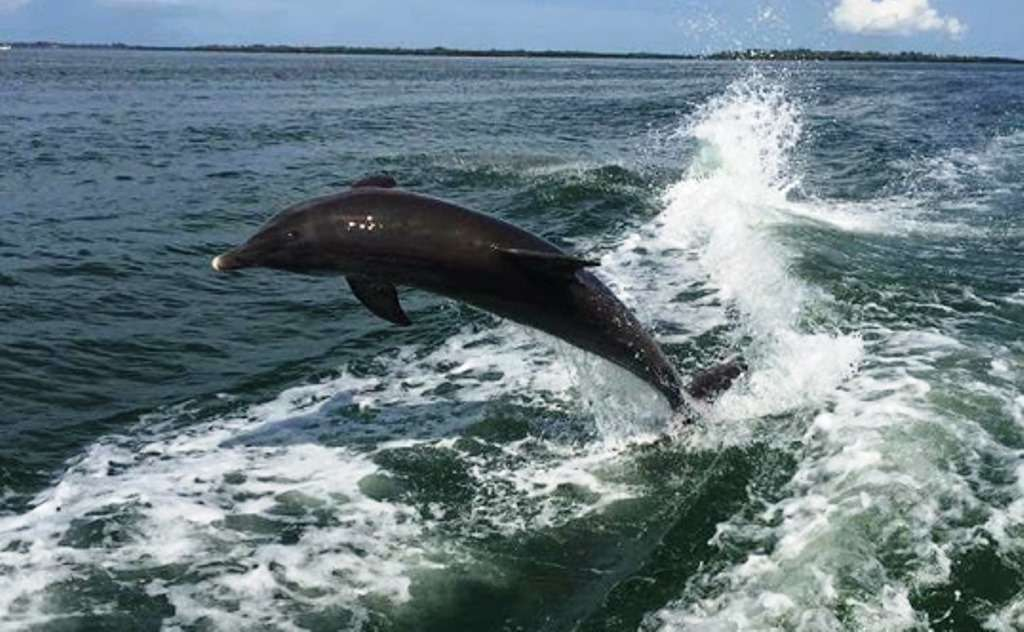 Charter a Dolphin Tour on the Bay