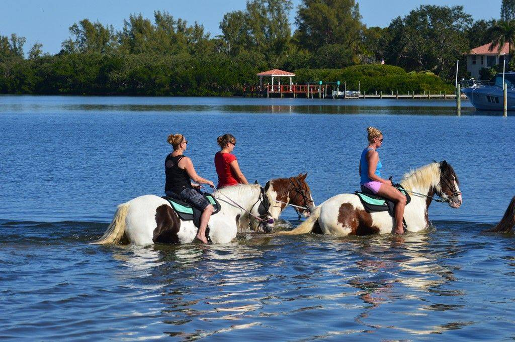 Horse Surfing on the Manatee Causeway