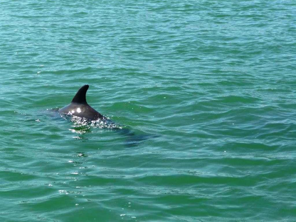 See if you Can Spot a Dolphin at Play