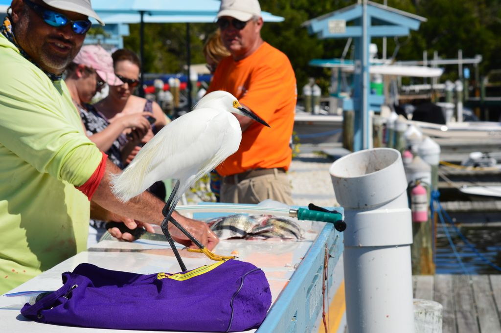 Keyes Marina Fishing Charters and Fillets your Catch