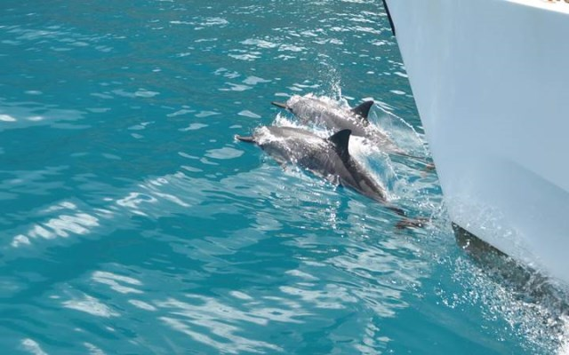 Boat Tour lead by dolphins