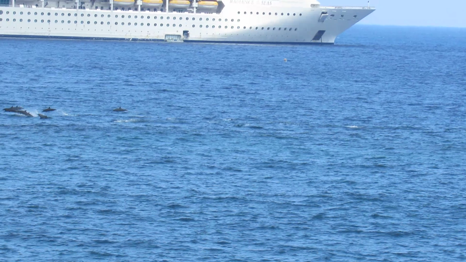 view of dolphins from the lanai looking out to the cruise ship.