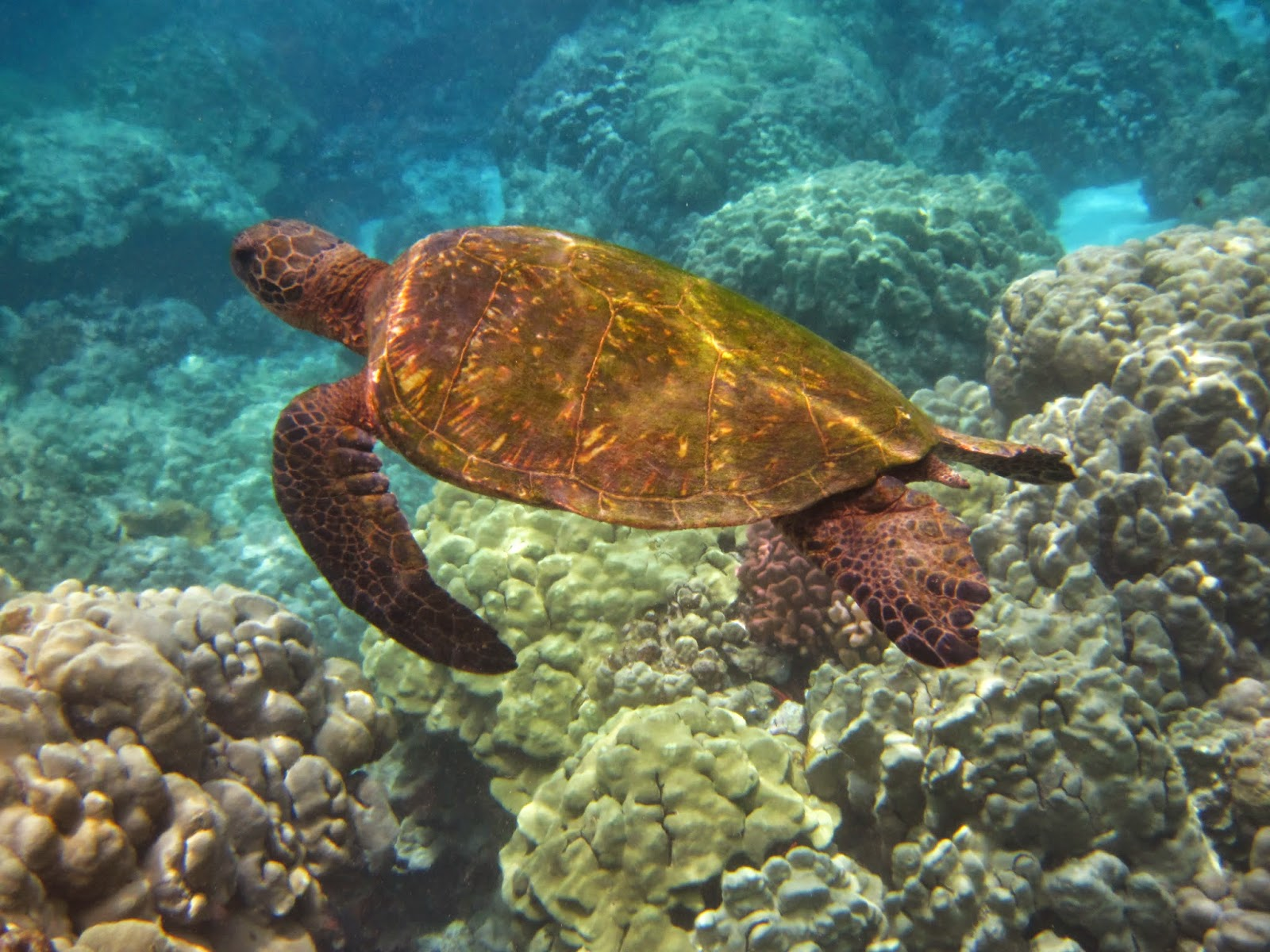 See the turtles from shore or sea.