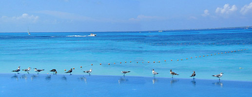 Even The Seagulls Love The Infinity Pool