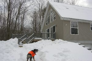 Pet Friendly (Dogs love snow)