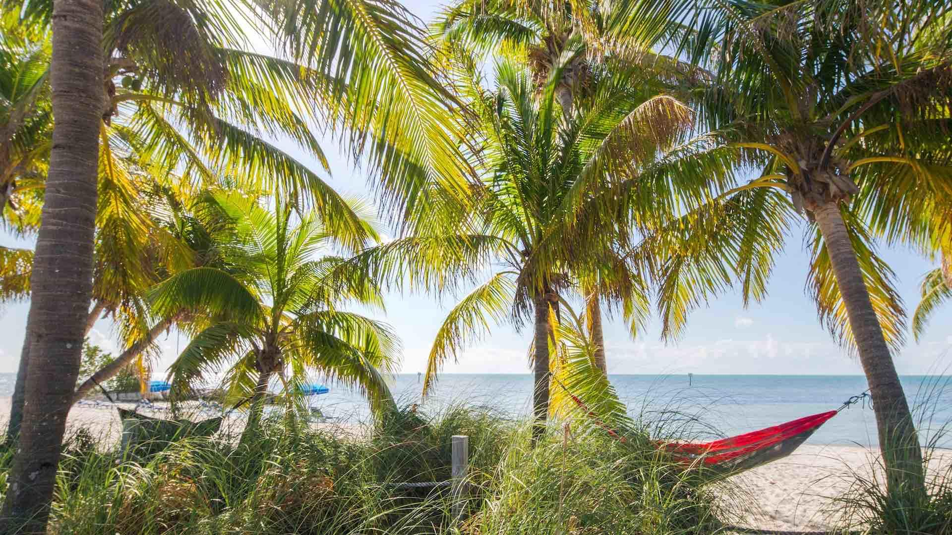 Catch some shade under the palms when you've had enough sun...