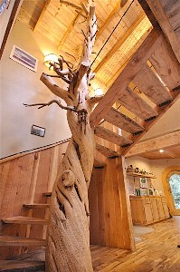 800 year old Juniper Tree Spiral Stair Case with myrtle wood