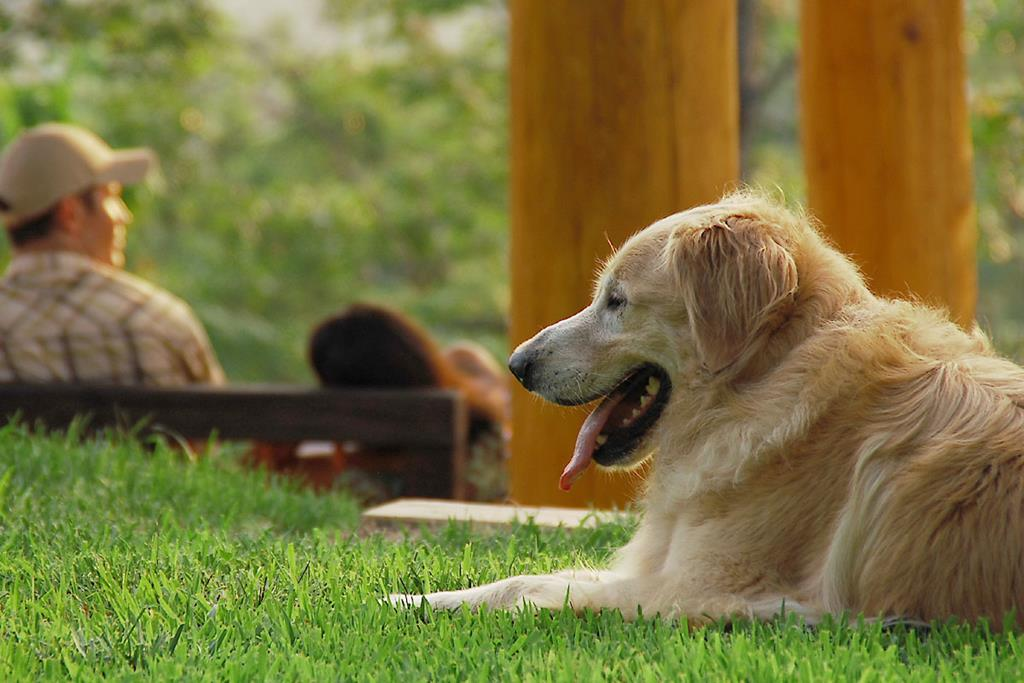 18) Dog friendly throughout the Resort