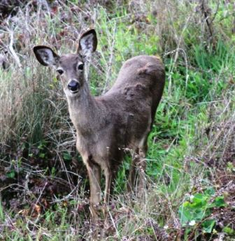 The curious deer are just a few of the wild animals here.