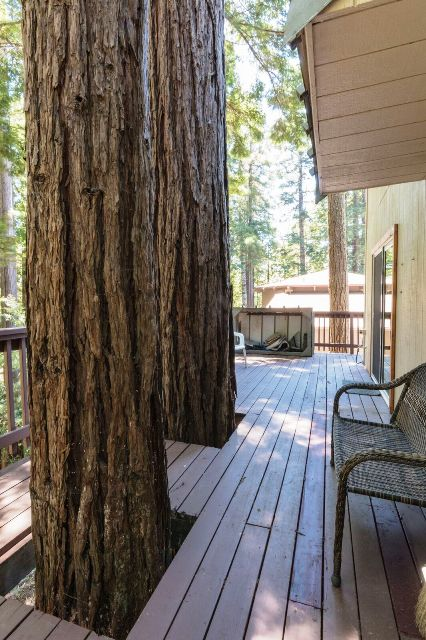 The redwoods growing through the deck