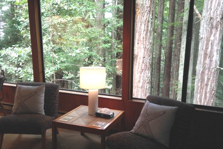 The majestic redwood trees outside the living room