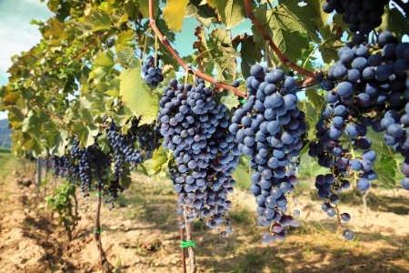 Vacations for Wine Lovers in the United States