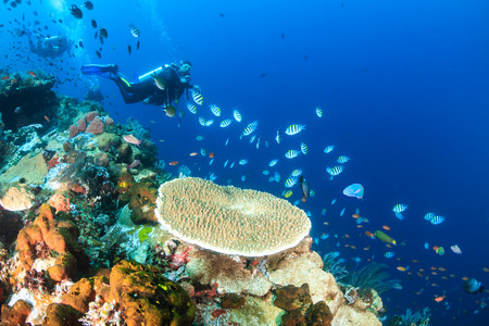 Types of Scuba Diving Holidays