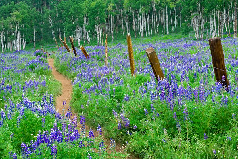 The Crested Butte Wildflower Festival