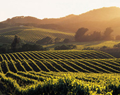Things to do in Sonoma County California