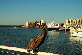 Things to do in Port Aransas Texas
